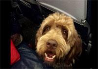 perro-caca-avión