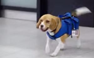Perro encuentra objetos en aeropuerto