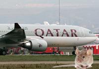 Ratón en un avión de Qatar Airways